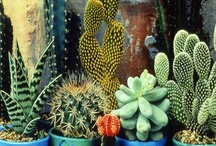 love a good succulent / by tractorgirl