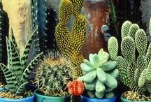 love a good succulent