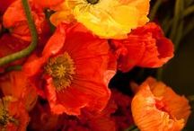 colours: feeling hot / -colour me curious