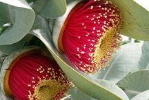 flora / the beautiful blooms of Australia