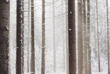 Trees / by Chantal Lang