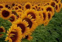 Flowers :)  / public