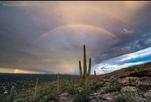 Sometimes I Miss Tucson / Still the <3 of the Southwest, at least to me. / by Marilyn Zimmers