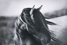 "Whoa. / ""All horses deserve, at least once in their lives, to be loved by a little girl."" / by Elaine Stillman Uehlein"