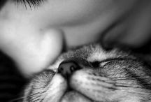 Fur Friends / by Julie Harris-Matsunaga