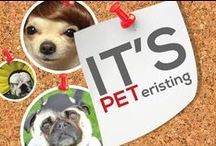 It's PETeristing  / Striving to be the #1 Pet Board on Pinterest. Hilarious photos of dogs, cats, elephants, mice, and everything in between. Catch a good ab work out as you laugh and a facelift as you smile. If you love the humor share with a friend. Have funny animal photos? Comment to be a contributor.  / by Power of Pinterest Book