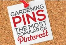 GARDENING PINS — THE MOST POPULAR ON PINTEREST BY # OF REPINS / Any GARDENING RELATED PIN that Achieves 1,000+ REPINS is Added to this Board, Making it Easier for You to Discover the Most Gardening Posts on Pinterest — This Board is Your #1 Source to Keep Tabs On and Discover the Most Popular Images Circulating on Pinterest in this Category! — Please Follow this Board. We Work Hard Daily to Update it for your Enjoyment it and Share With You the Best Content & Most Popular Gardening Related Pins! : )  / by Power of Pinterest Book