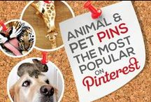 ANIMAL & PET PINS — THE MOST POPULAR ON PINTEREST BY # OF REPINS / Any ANIMAL AND PET PIN that Achieves 1,000+ REPINS is Added to this Board, Making it Easier for You to Discover the Most Popular Animal and Pet Pins on Pinterest — This Board is Your #1 Source to Keep Tabs On and Discover the Most Popular Images Circulating on Pinterest in this Category! — Please Follow this Board. We Work Hard Daily to Update it for your Enjoyment it and Share With You the Best Content & Most Popular Animal and Pet Pins! : )  / by Power of Pinterest Book