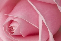 PINK / SHADES OF PINK / by ♔Queeniee♔ Northeast