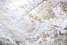 spring + summer