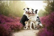 Stunning Dog Photos / We adore incredible and gorgeous photography of dogs.