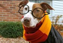 Howl-o-Ween for Dogs / All things Halloween, or Howl-o-Ween for Dogs.
