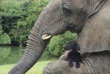 animal love / by Amy Hernandez