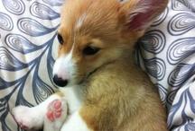 Puppies! / by Lindsay Thomas