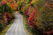 Fall Foliage in Vermont / Visit Vermont or enjoy it's fall foliage virtually