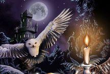 Owls / by Pamela