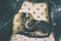 animals, mainly cats / by Kimberley Kufaas