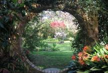 Secret Garden / by Casey Ellis