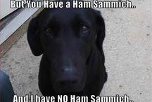 Sydney pup / I love my black labrador retriever!  / by Stephanie B