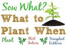 How Does Your Garden Grow? / by Jeanette Ross