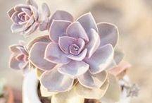 garden / by Leah Constantine