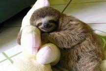Just Sloths / Sloths.
