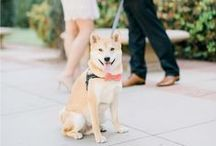 Love . Pets in Weddings