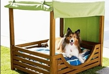 Pet Friendly Home / by Baer's Furniture