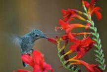 Hovering Hummingbirds!