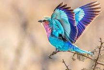 Beautiful Birds!