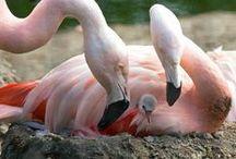 Flamboyant Flamingoes! / by Sandy English