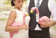Pretty Little...Flamingos