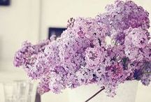LilacThings! / Lovely Lilac Things!