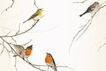 BIRDS & C° / Vintage Postcards, Birdcage, Birdhouse, Birds......