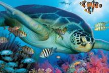 ^Ocean life^ / I love the sea!