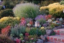 Home: Gardens/ Plants/ Fairy / Unique & Beautiful gardens indoor & out. Landscapes, fairy gardens, container gardens, garden accessories.