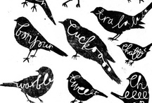 eye candy || birds