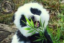 Animals || Pandas