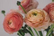 babie lato | kwiatowe tapety