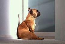 dog person.