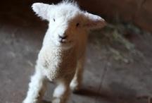 cute animals / adorable cute baby puppy  / by Caroline thruston