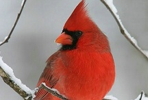 God loves me sign! / Everytime I see a cardinal it reminds me of how much God loves me! What reminds you?