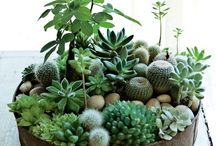Succulents, cacti, and all green living things.