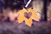 Autumn Inspiration / Crafts, Autumn Activities, Decor, Tutorials www.whimsicalmumblings.co.uk