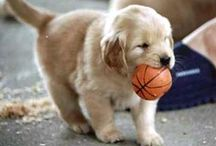 Future Pup! / by Sara Palmer