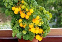 Vegetable Garden DIY