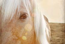 Look Mom, HORSES! / Horses / by Nina Miller
