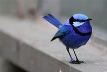 I have a thing for blue birds.