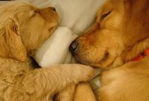 Pups / by Jenn St.Clair