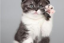 Cats & Kittens / Cute Cats and Kittens Worldwide!  Bay Ridge Pet Sitter - Dog Walking, Cat Care, Pet Sitting / by ♥♥ Isabel ♥♥ Bay Ridge Pet Sitter ♥♥